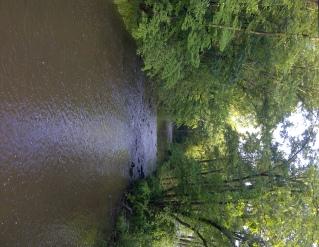 stream of life2
